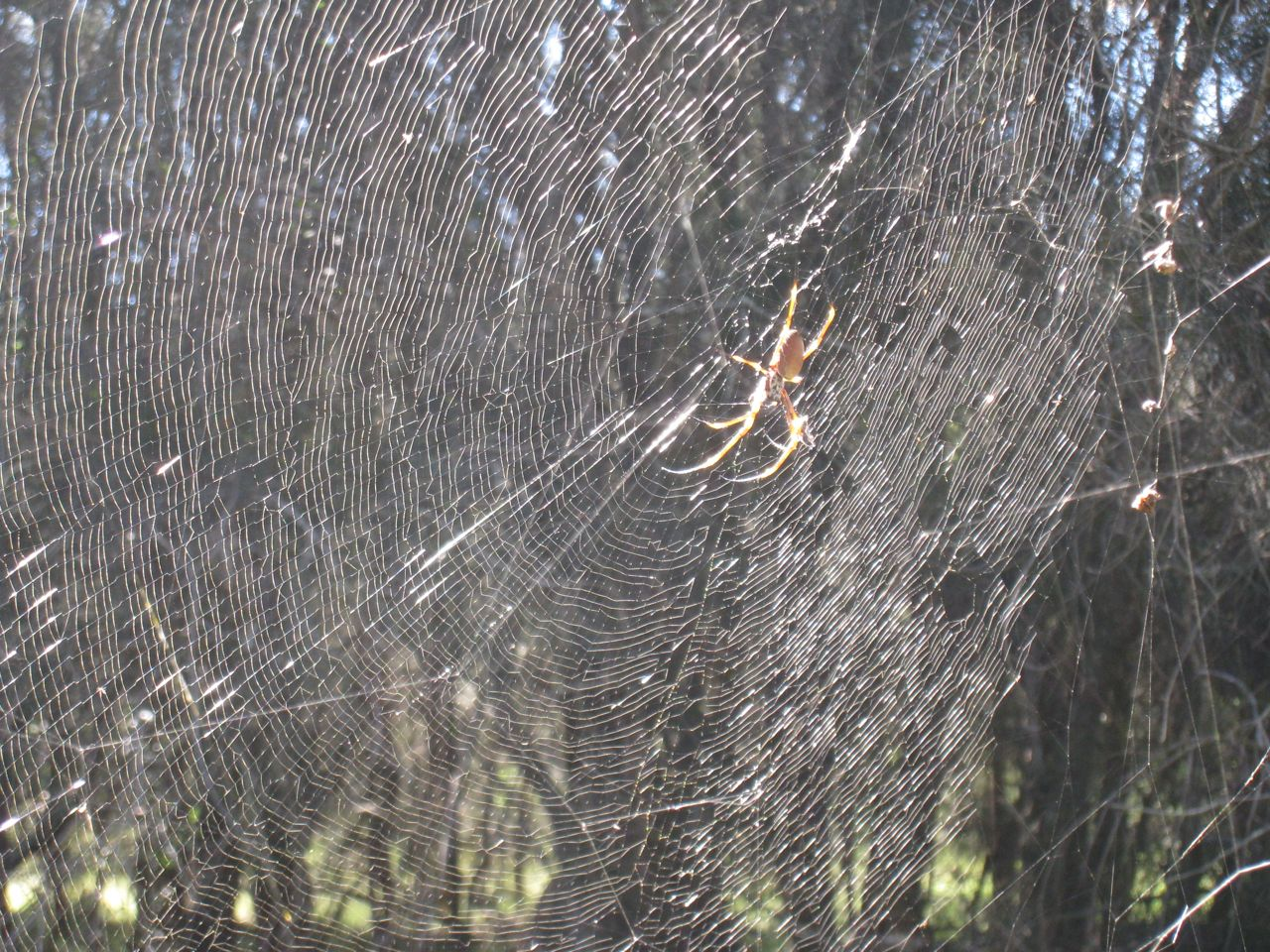 myths surrounding a spider weaving a web Click here to read some interesting facts and myths about spiders daddy long legs are not actually spiders at all, making this myth completely false more spider facts the following statements are confirmed facts about spiders: the fishing spider doesn't make a web to catch prey like its cousins it rests in the surface.
