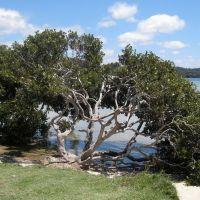 Mangrove Serenity