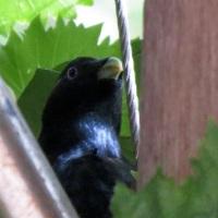 Morning Birds