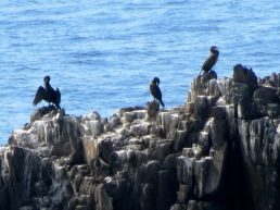 and close-up of the shags