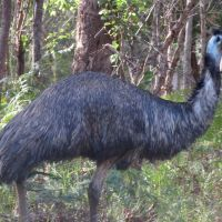 Introducing Emus