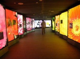 through the colourful entry where flowering plants are featured