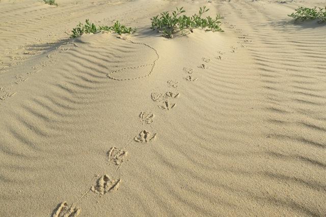 sandpatterns