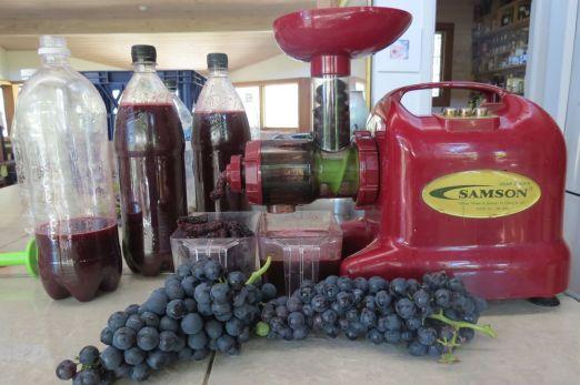 screw juicer, grapes, bottles of juice
