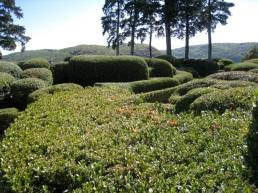 Gardens of Marqueyssac Dordogne