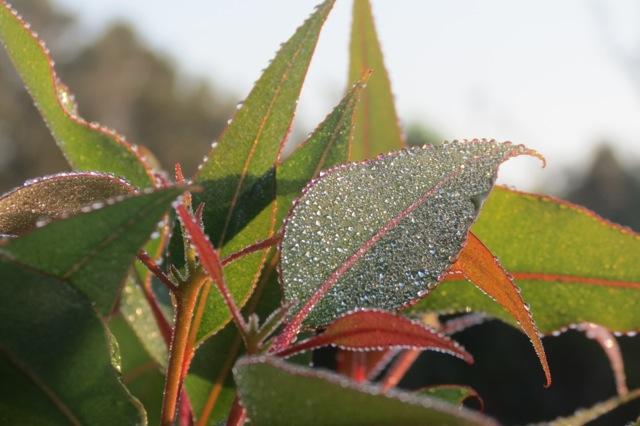 dewdrops3