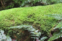 luxuriant moss