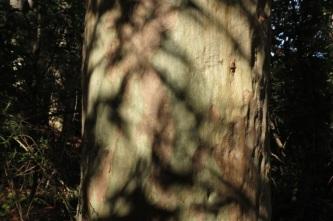 bark and shadow