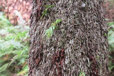 primitive fern on tree trunk