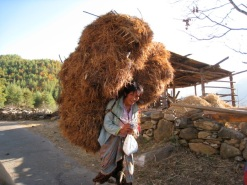 carrying bracken