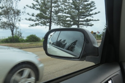 Norfolk Island pines along the beach at Rockdale