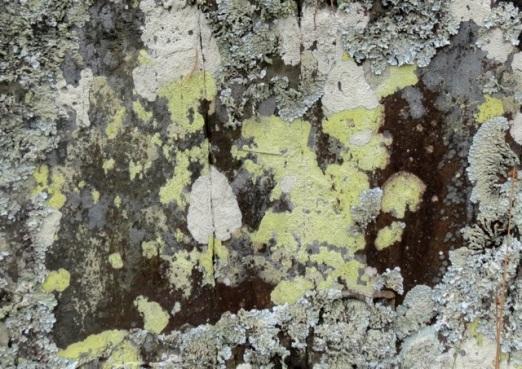 green lichen on rocks