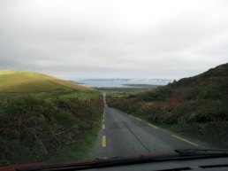 fuchsia hedges line the road down into Dingle township