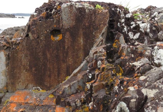 orange lichens on rocks