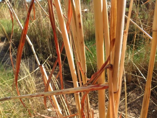 tallgrasses