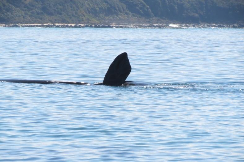 whalefluke