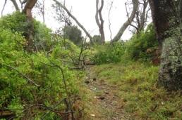 debris on the path