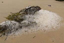 seaweed and foam
