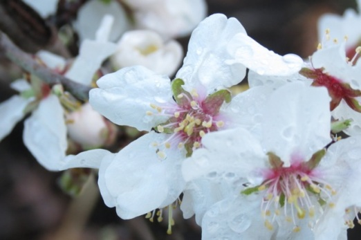 moist new blossom