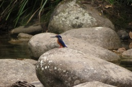 river smooth granite with azure kingfisher