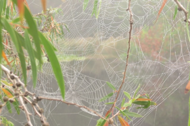 foggy spider web