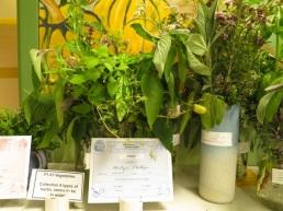 six green herbs