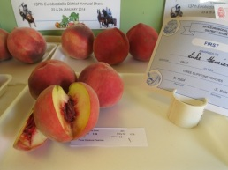 first prize slipstone peaches