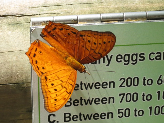 Butterfly and Interpretive Sign