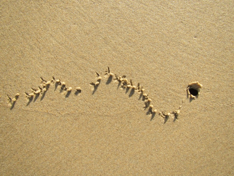 crab trail