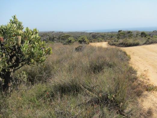 heathland track