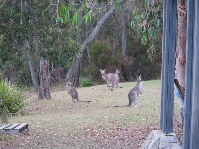 roos by the house