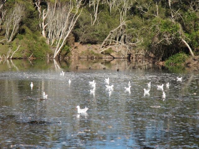 autumn lagoon