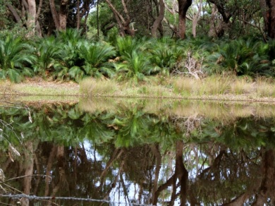xanthorrhoea reflections