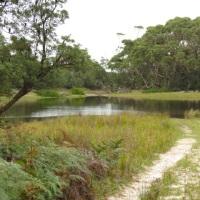 Jo's Monday Walk: Swimming on the Bingie Dreaming Track