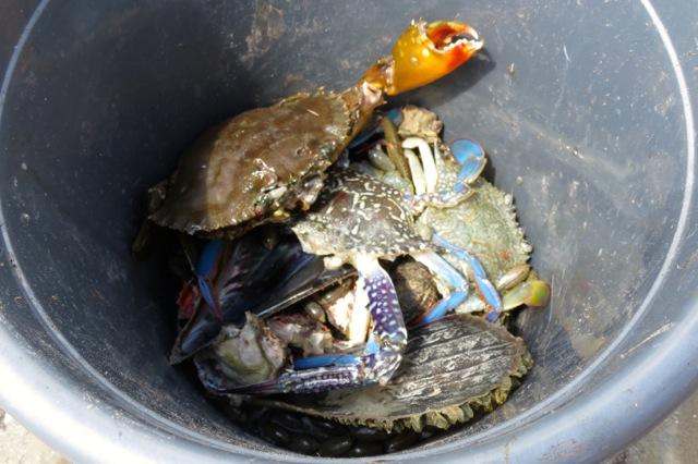 crabs inside