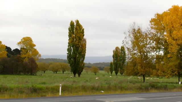 glowing trees near Braidwood