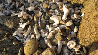 shells becoming sand