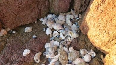 shady shell hideaway